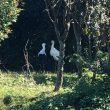 秋のバスツアー コウノトリ公園 出石城